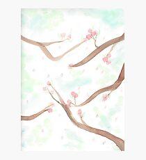 Simplistic Cherry Blossoms Photographic Print