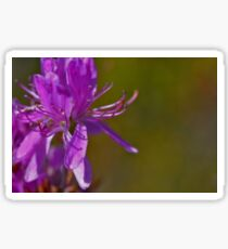 Rhododendrons - Beauty In The Bog Sticker
