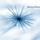 Nature's Snow Flake Christmas Card by Lesley Smitheringale