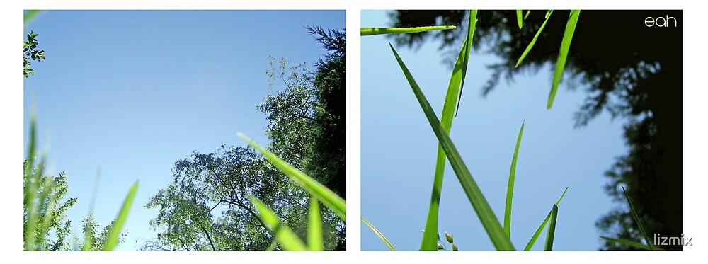grass by lizmix