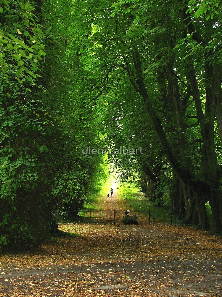 Autunm Leaves by glenn albert
