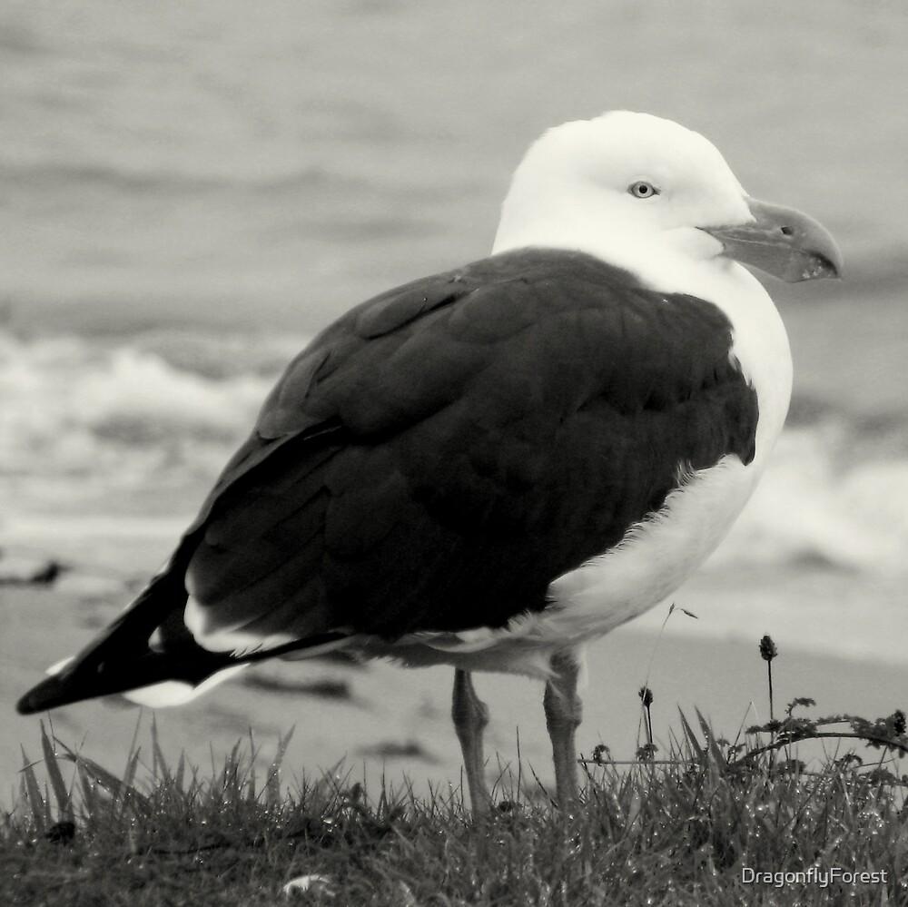 gull on a break by DragonflyForest