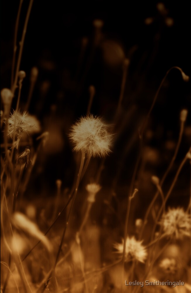 Field of Dandelions by Lesley Smitheringale