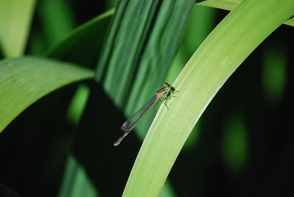 Dragonfly by Princessbren2006