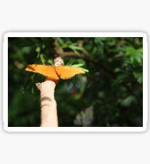 Butterfly Sticker