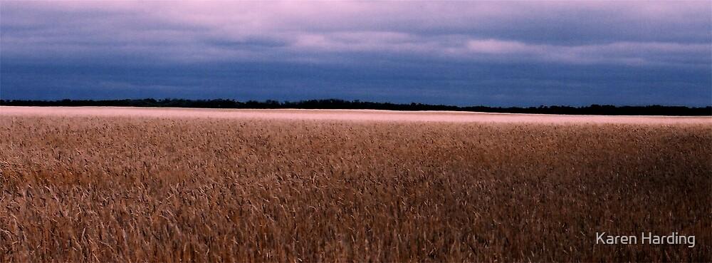 Canadian Wheat Field by Karen Harding