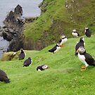 Puffins on Fair Isle by Fiona MacNab