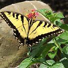 Butterfly Breakfast by Kenneth Hoffman