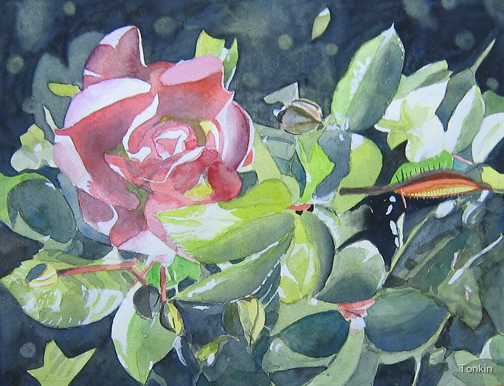 Rose in my garden by Tonkin