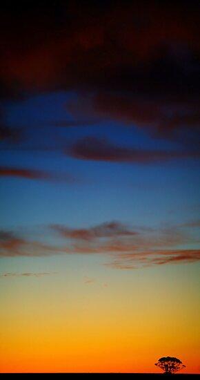 Daylight by Craig Shillington