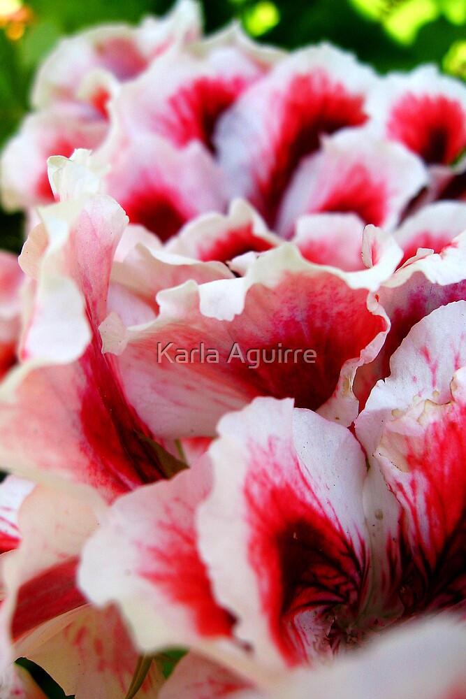 Petals by Karla Aguirre