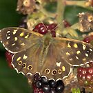 Butterfly by SWEEPER