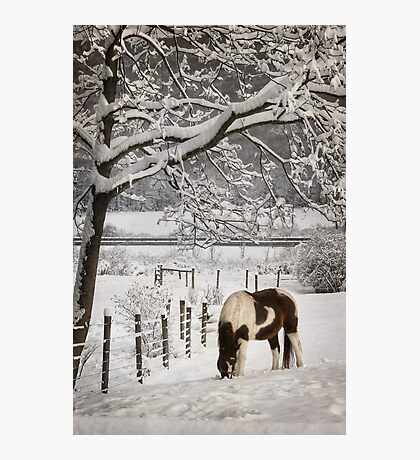 Paint in the Snow Photographic Print