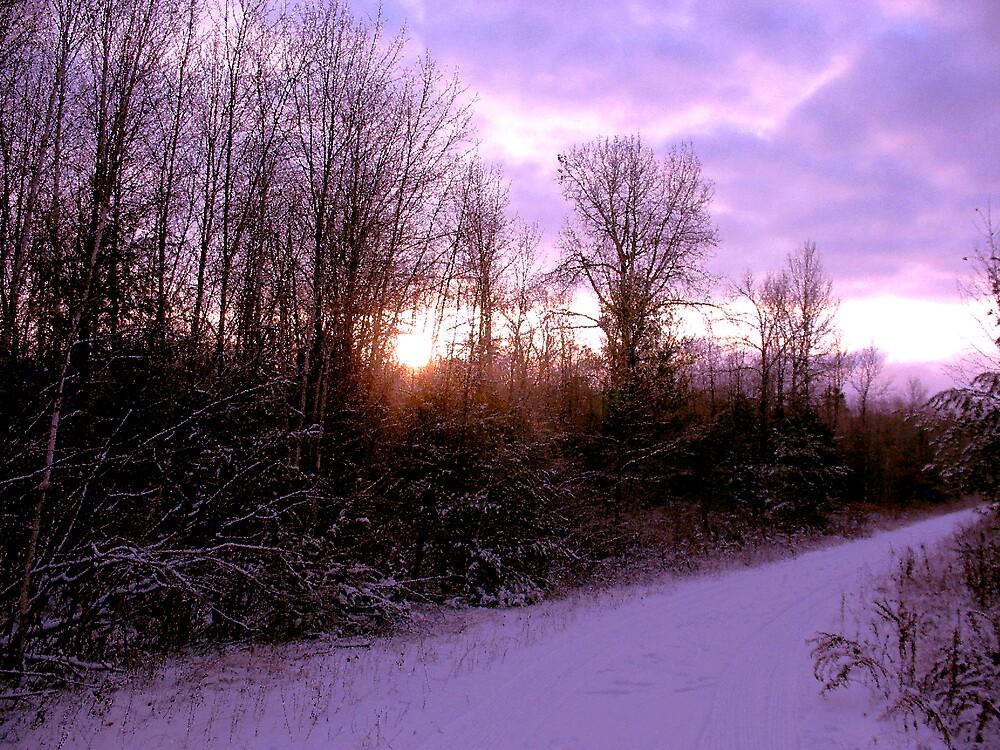 Purple Winter by nikspix