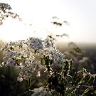 Flowers at dawn by Anteia