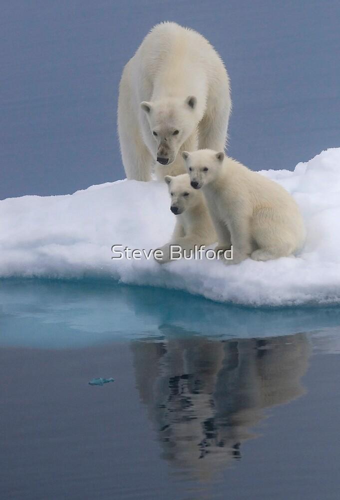 Polar Reflections by Steve Bulford