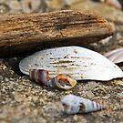 Seashellscape by moorefaith