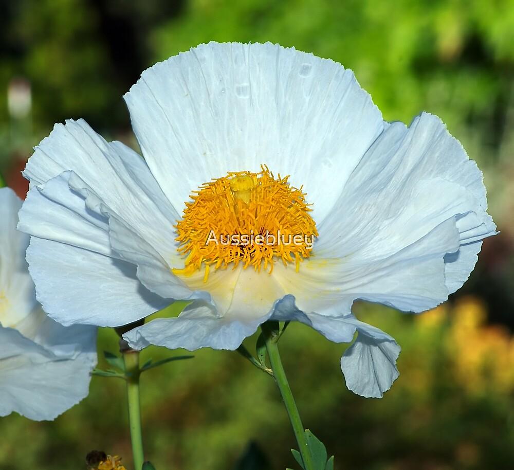 White Flower by Aussiebluey