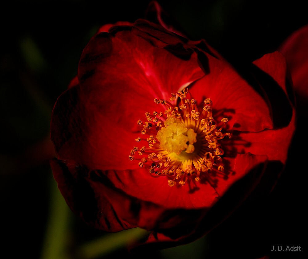 Eager for Pollination in the Darkness of Day by J. D. Adsit