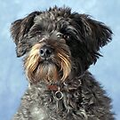 Bella the Schnoodle! by LisaRoberts
