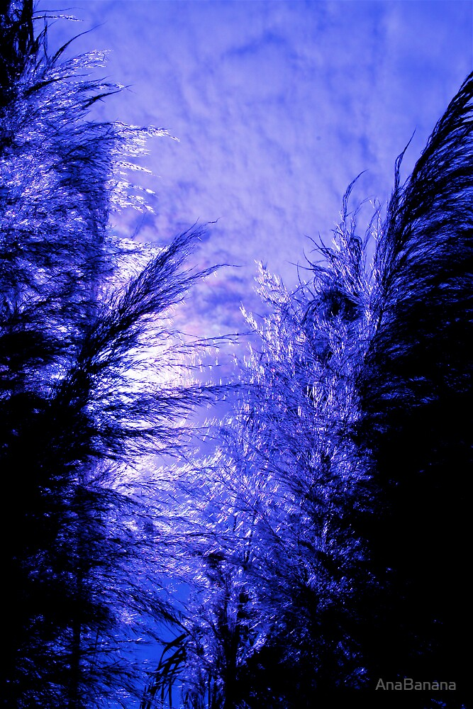 winter dream  by AnaBanana