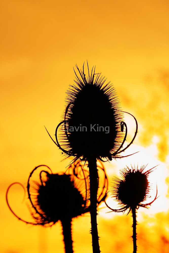 Three sisters by Gavin King