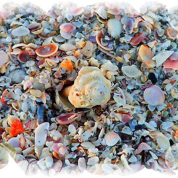 Shells by JudyGayle