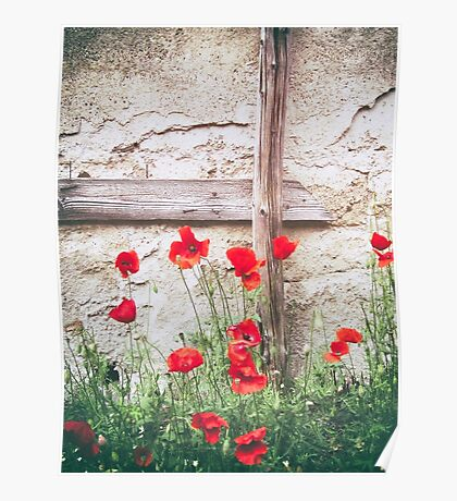 Poppies against wall Poster
