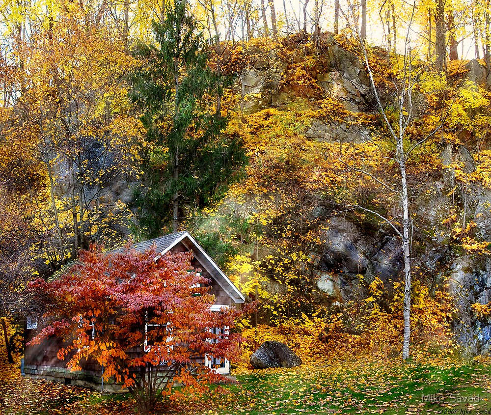 Cabin in the Woods by Mike  Savad
