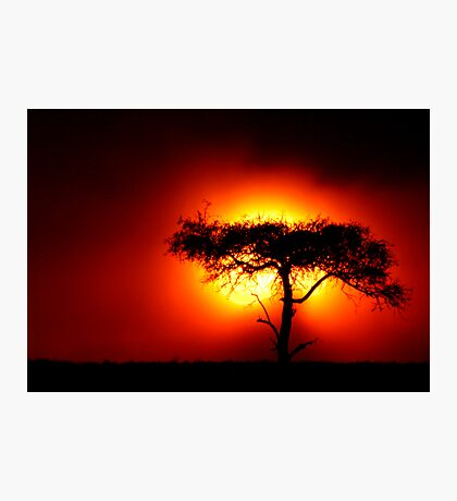 Sun Tree Photographic Print