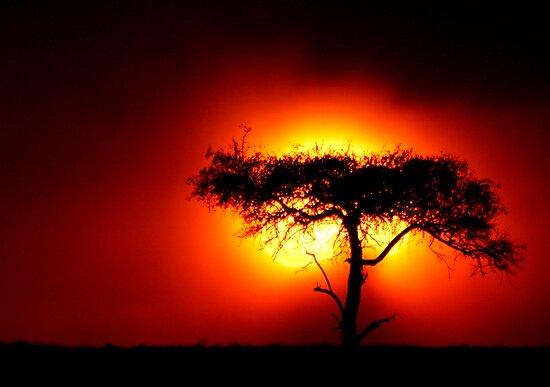 Sun Tree by Steve Bulford