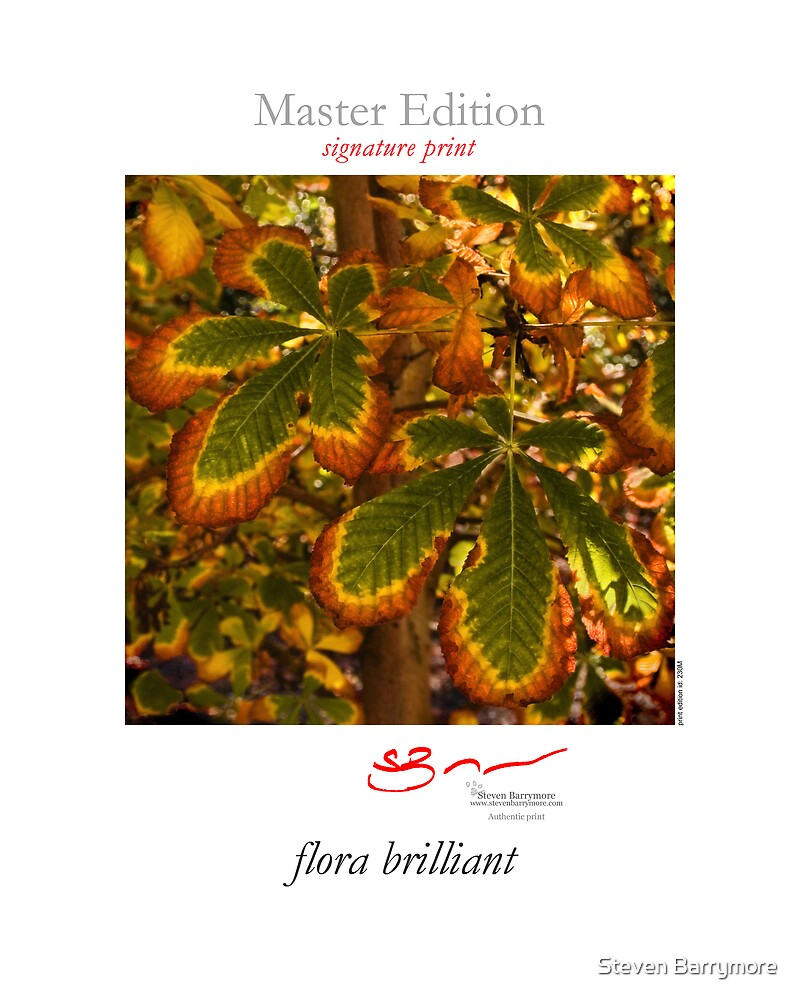 flora brilliant  by Steven Barrymore