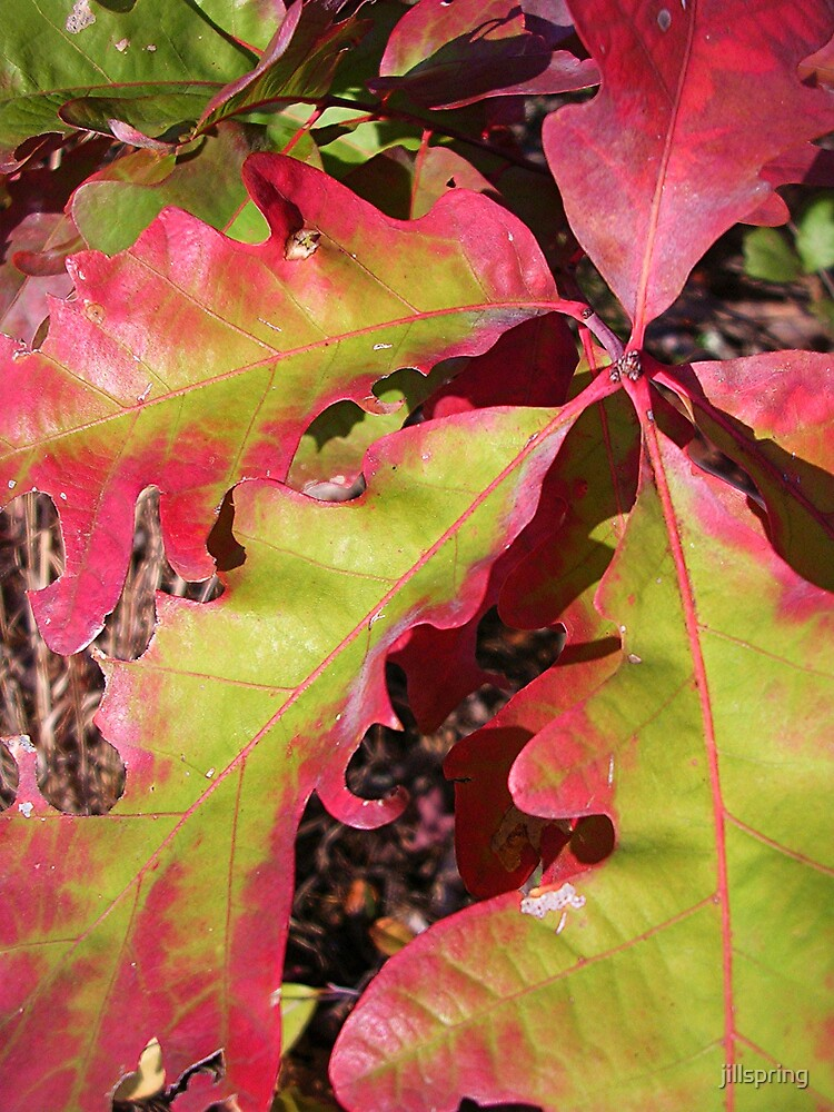 Encroaching Autumn by jillspring