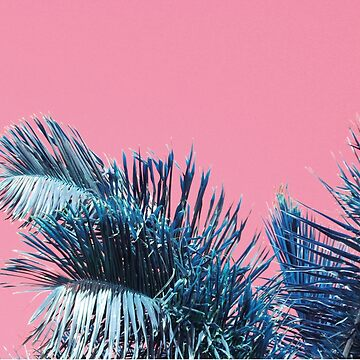 Palme von froileinjuno