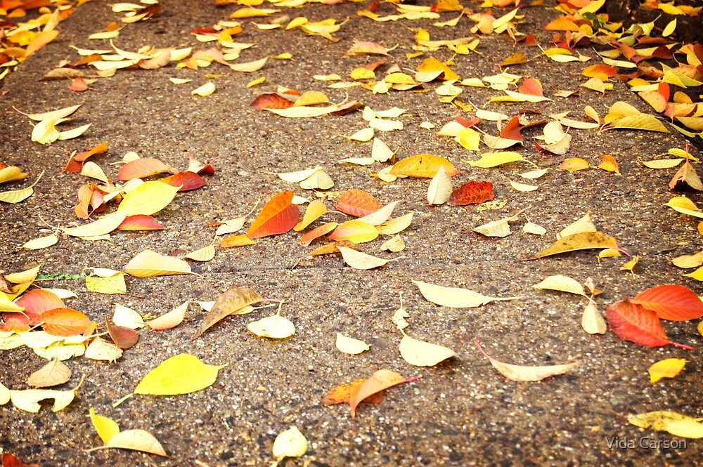 the autumn leaves are falling by Vida Carson