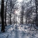 Snowy Forest by Anteia