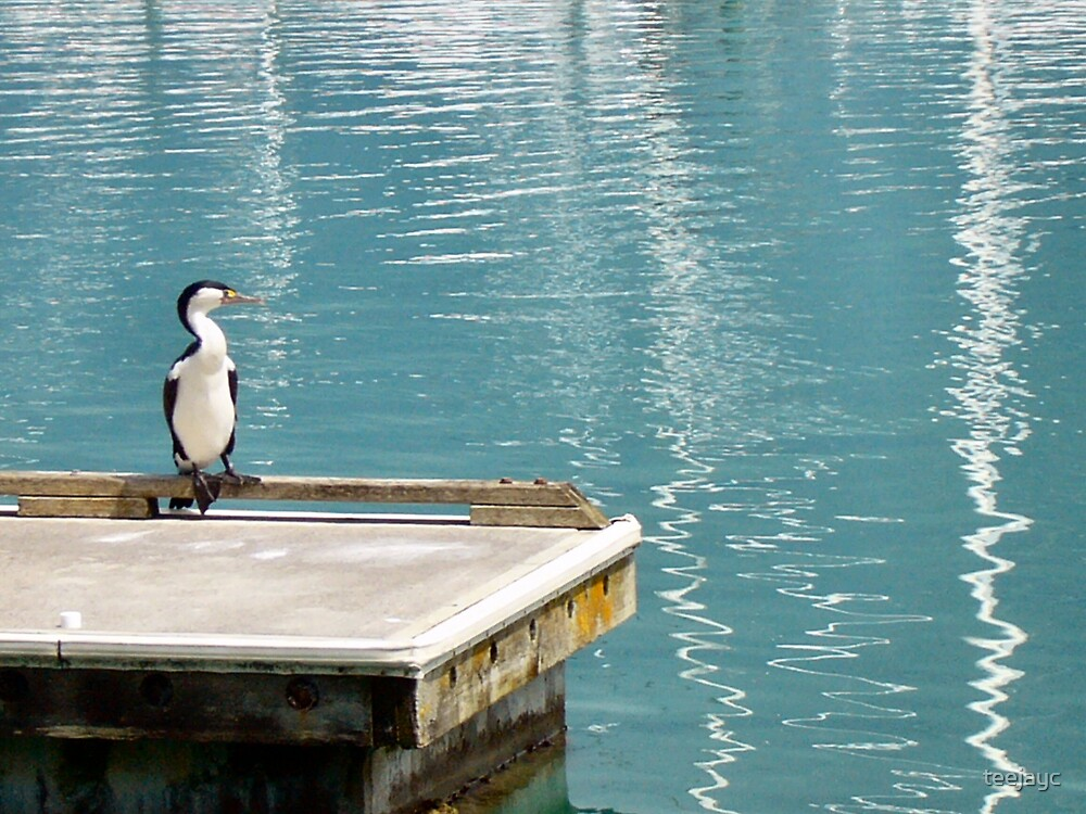 sitting on the dock..at the marina by teejayc