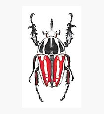 Giant Beetle Photographic Print