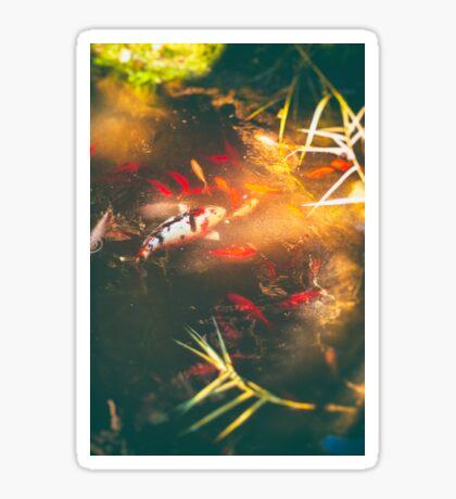 Pond Sticker