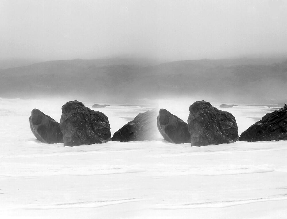Rocks Double by Bloom