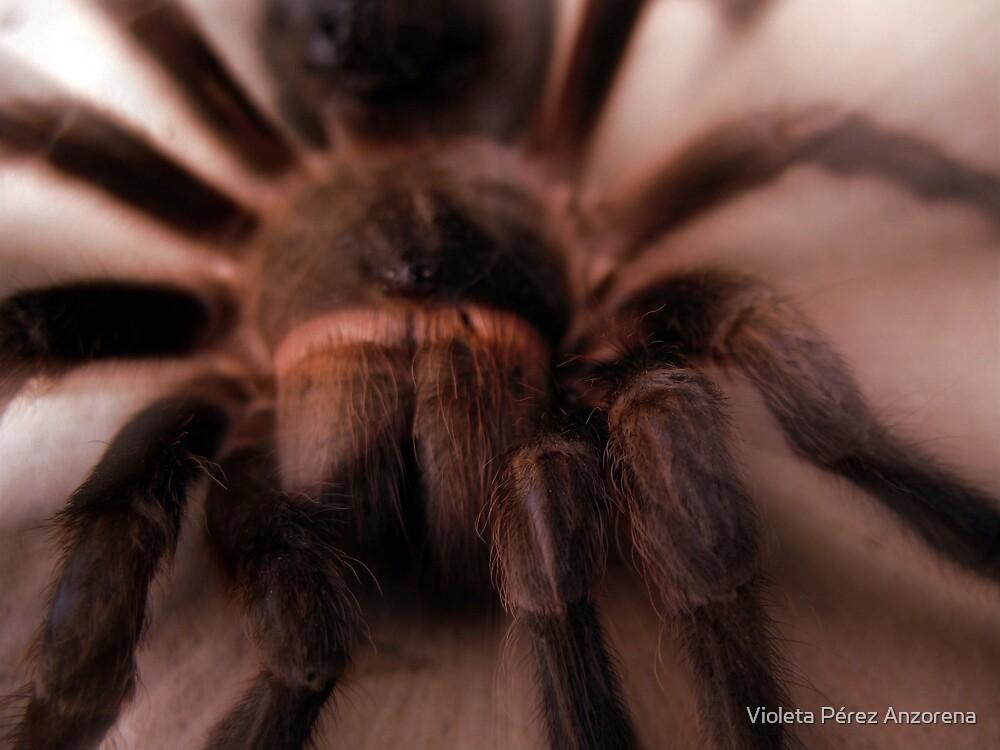 Little Spider by Violeta Pérez Anzorena
