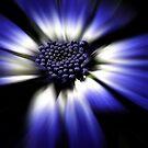 Blue by Claire Armistead