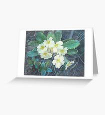 Primroses Greeting Card