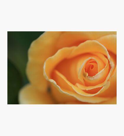 Apricot Ripple Photographic Print