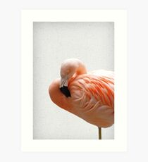 Flamingo 09 Kunstdruck