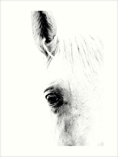 Horse 01 von froileinjuno