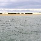 Broadwater with Pelican by Virginia McGowan
