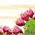 strawberry prickly pear by redqueenself