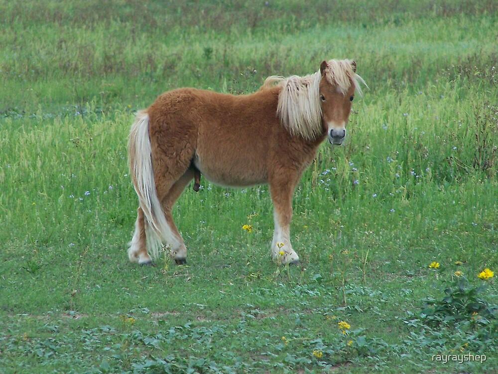 Lil' Pony by rayrayshep