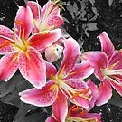 Tiger Lilies by the Bandstand by kenspics